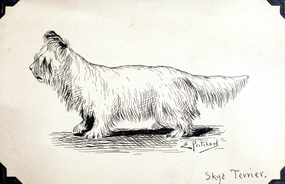 Drawing of a Skye Terrier by E.F.D. Pritchard (b. 1809)